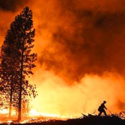 PG&E Files for Bankruptcy After California Wild Fires